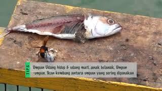 Randuk: Aktiviti memancing di Sungai Pelek, Sepang
