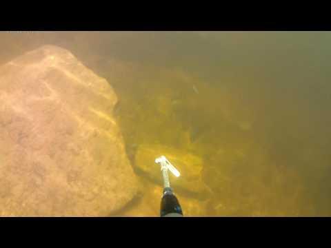 Spearfishing St Lawrence River, Quebec, Bass 3kg. Chasse marine harpon achigan. Подводная охота 2017