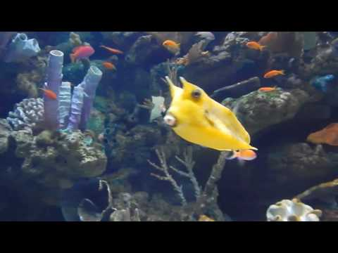 Aquarium of the Pacific: Tropical Pacific Gallery (2/3)