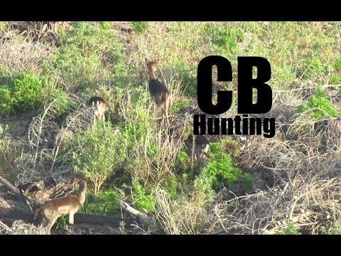 Woodhill Fallow Deer Hunt 2014