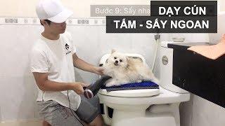 Tắm + Sấy cho cún dễ dàng | Chăm sóc cún con | Huấn luyện chó cơ bản BossDog |