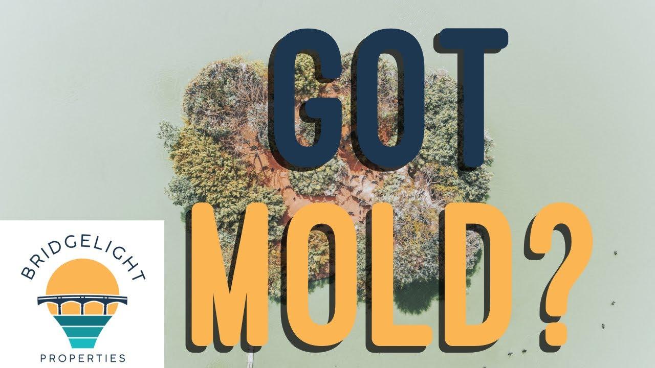 Have Mold in Your House? - Bridgelight Properties