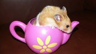 Titine le hamster - Jacky Galou