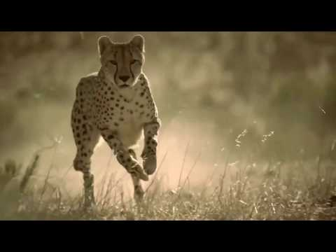 Christopher Walken   King Of The jungle