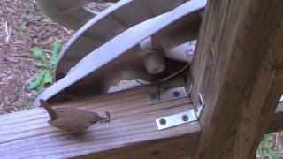 Wrens in Hose Reel - 2