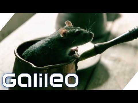 Hättest du die Pest überlebt? Can you survive history? | Galileo | ProSieben