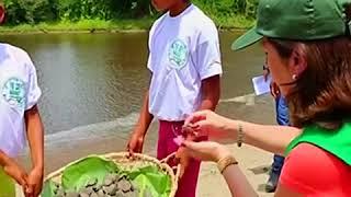 ԱՌԱՆՑ ՄԵԿՆԱԲԱՆՈՒԹՅԱՆ  Պերուում արհեստականորեն աճեցված կրիաներին արձակել են վայրի բնություն