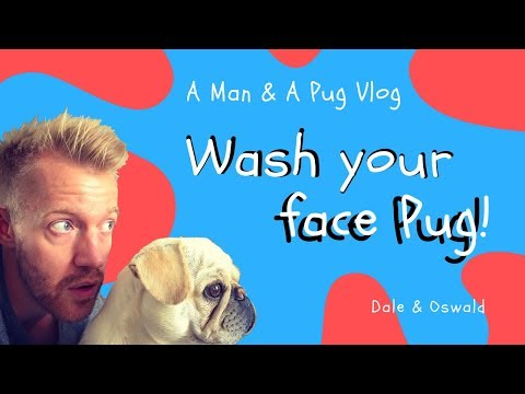 How To Clean Your Pug's Face