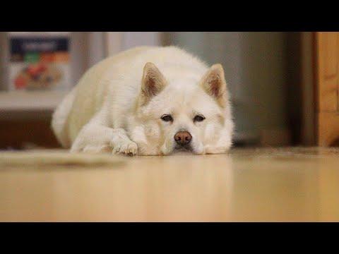 How To Make Dog Ferocious