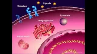 Introduction to Cancer Biology (Part 1): Abnormal Signal Transduction