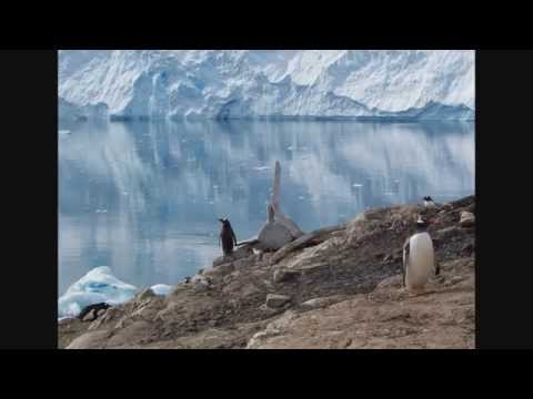 Penguins and Glaciers - Neko Harbour, Antarctica