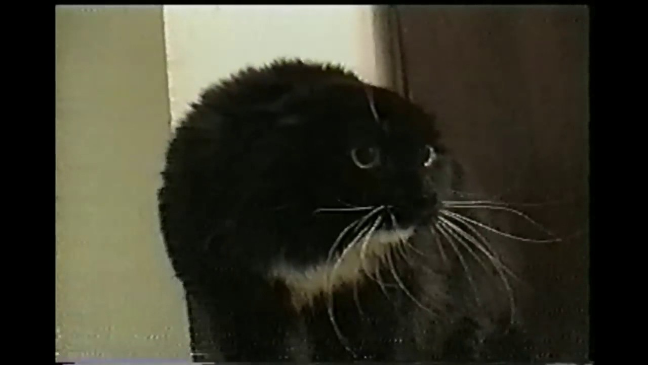 talking cat saying oh long johnson youtube