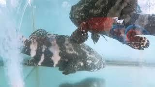 Cá Biển | Tôm Hùm | Sea Fish | lobster