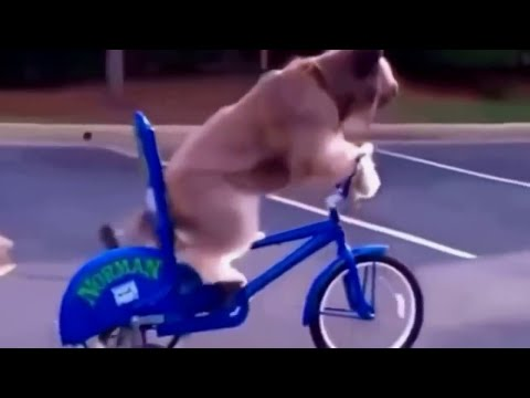 Самые смешные ролики с собаками со всего мира!