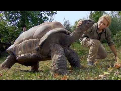 Friendship Between Humans and Animals - Documentary Films 2017