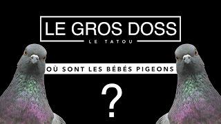 Pourquoi ne voit-on jamais de bébés pigeons ?