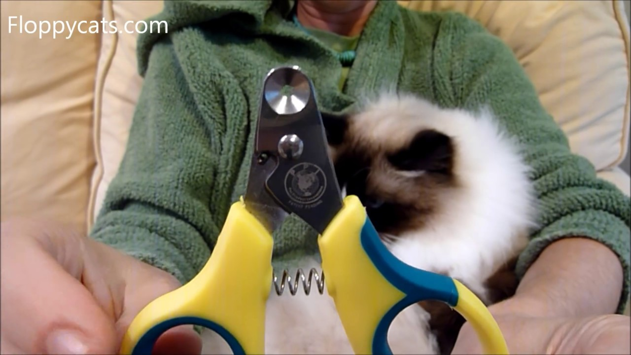Zen Clipper Cat Nail Clippers Product Review ねこ ラグドーãƒ