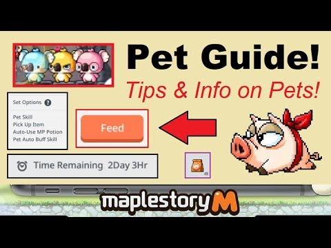 ~Pet Guide!~ Information & Tips For Pets In Maplestory M! (Maplestory Mobile Video Guide)