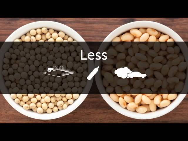 The Science Behind Plant-Based Proteins