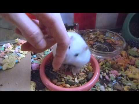 Princess Isabel eating