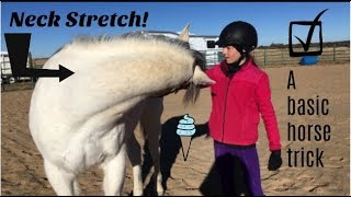 Basic Trick to Teach Your Horse ~ Neck Stretch