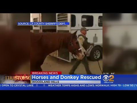 Actor Rick Schroder, LA County Sheriff's Deputies Get Horses, Donkeys To Safety