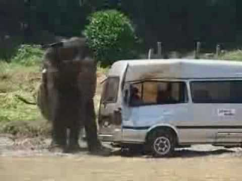 Elephant gone mad In Sri Lanka avi