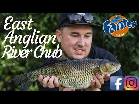 Stalking East Anglian River Chub - NEW PB