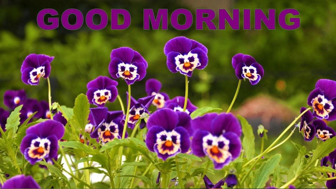 Beautiful goodmorning with beautiful fresh flowers youtube beautiful goodmorning with beautiful fresh flowers izmirmasajfo