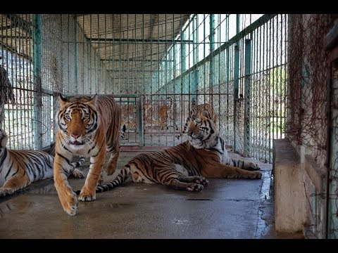 Tracking the trade Episode 1: Illegal Wildlife Trade in Southeast Asia | WWF-Singapore Mp3
