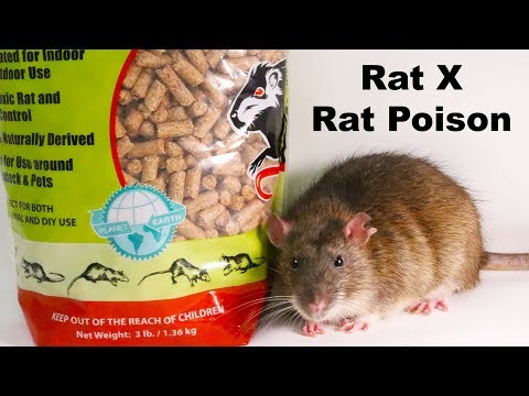 Why Rat X Is The Only Rat Poison I Will Ever Use - Safe & Effective - Mousetrap Monday