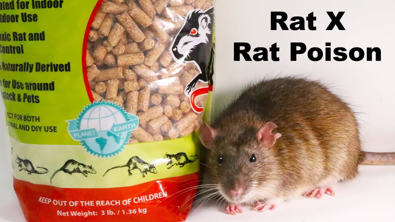 Why Rat X Is The Only Rat Poison I Will