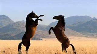 Play Wild Horses
