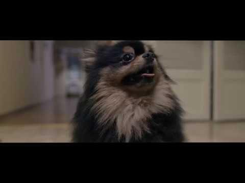 Dog Alone - Horror Short