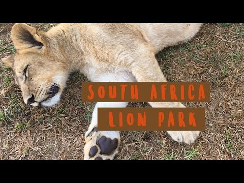 What To Do In South Africa: Visit A Lion Park