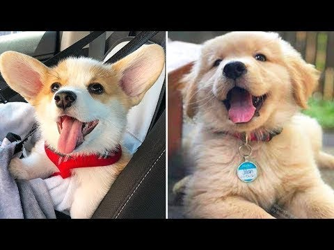 Funny Cats and Dogs Videos Compilation 2020 – Funniest Dogs and Cats