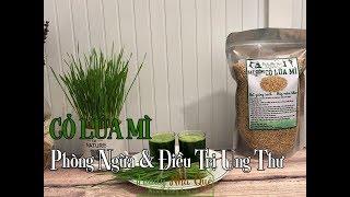 CÁCH SỬ DỤNG CỎ LÚA MÌ ĐỂ PHÒNG VÀ ĐIỀU TRỊ UNG THƯ - How to Use Wheatgrass Juice Therapy