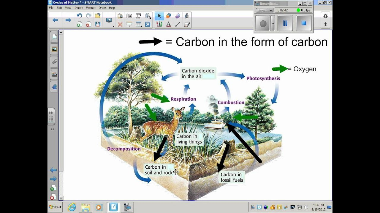 Carbon oxygen cycle youtube ccuart Choice Image
