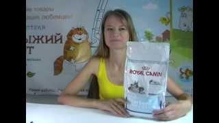 видео Royal Canin Labrador Retriever 30 Adult, 12+2 кг
