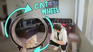 TESTING WEIRD CAT PRODUCTS! 2