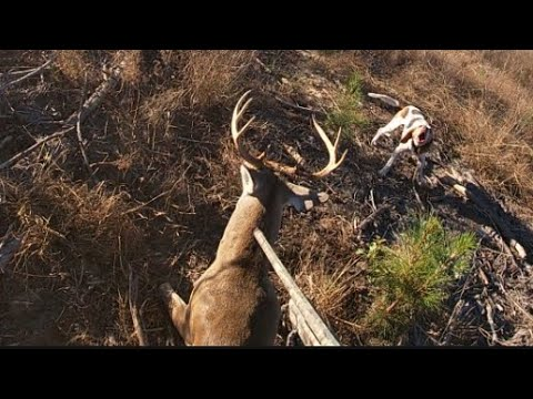 SC Deer Dog Drive 11/21/20: Big bucks killed on cam!