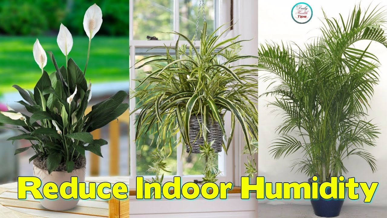 Marvelous 6 Easy To Keep Plants That Reduce Indoor Humidity