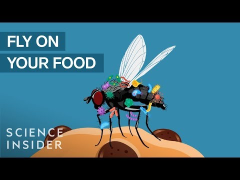 What Happens When A Fly Lands On Your Food