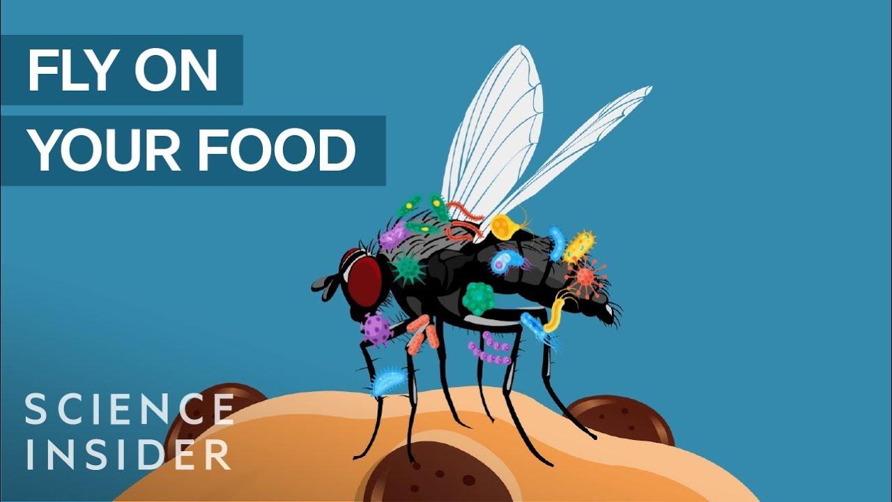 """Што се случува кога мува ќе """"слета"""" на вашата храна?"""