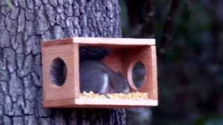 Squirrel Feeder With Window, Hand Made/crafted, Cedar Wood, New!