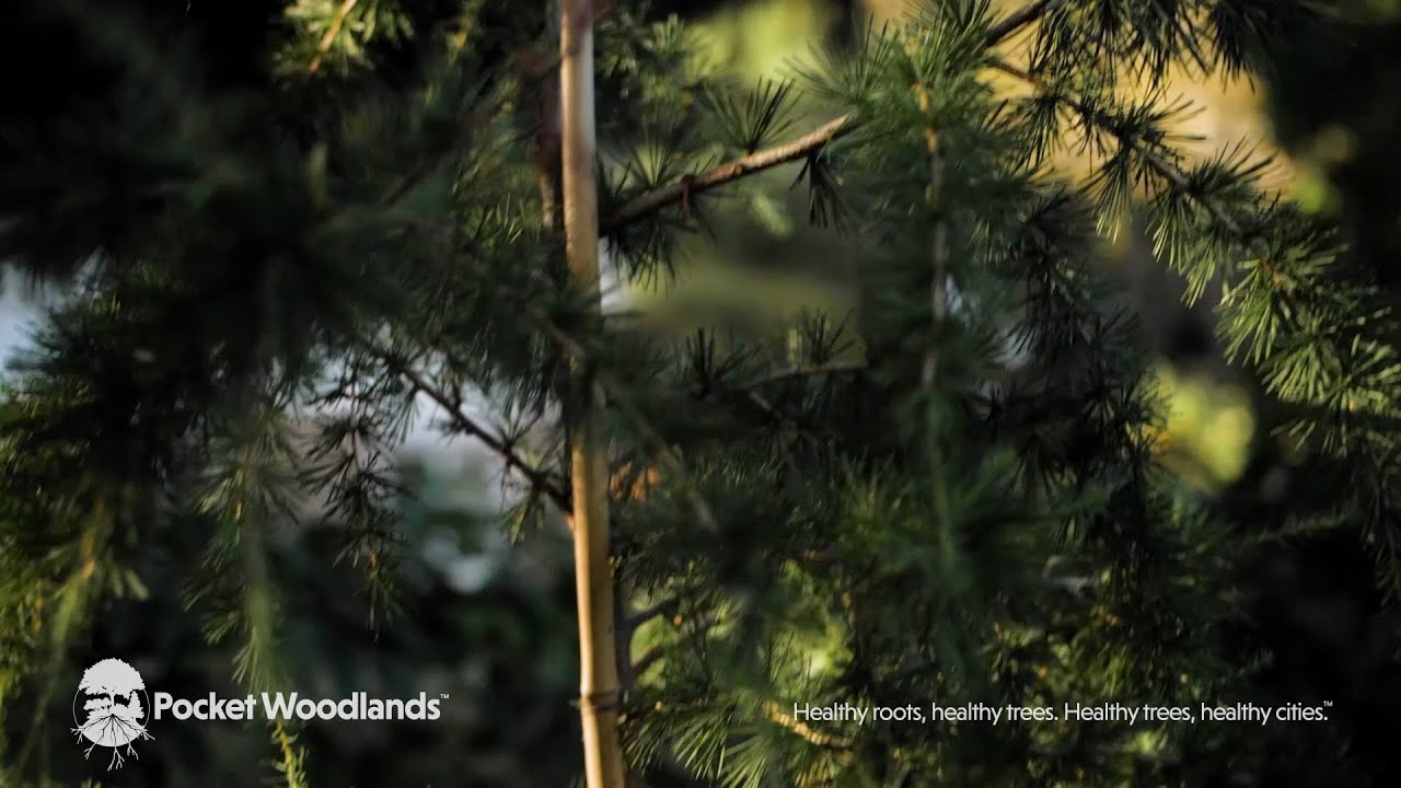 Pocket Woodlands® Influences on Climate Change - The Fifth Video In Our Series