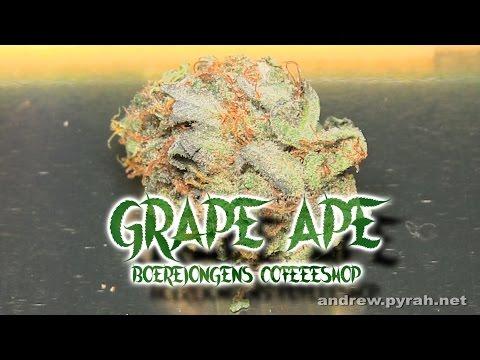 GRAPE APE Boerejongens Coffeeshop - Amsterdam Weed Review 2015
