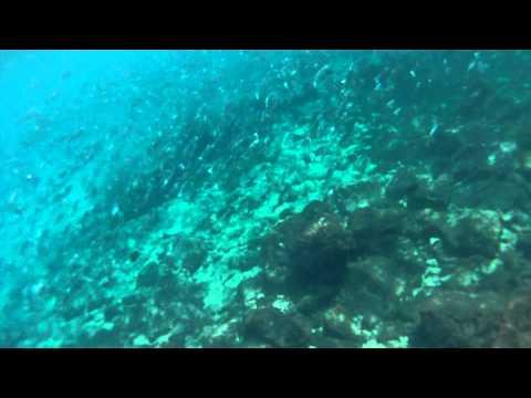 Nauru Underwater - Large School