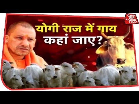 Exclusive: योगी राज में गायों को 'ठिकाने लगाने' का खेल, किसान बेहाल-गोरक्षक मालामाल