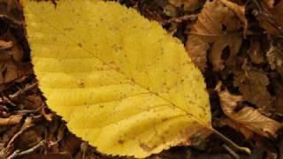 Frunza galbena-Pasarea colibri